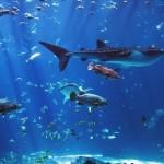 Aquarium Georgia
